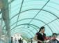 塑料大棚阳光板、厂家pc阳光板批发